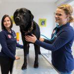 Ein Hund bei der Untersuchung in der Tierarztpraxis Paeger