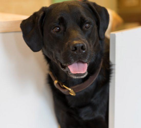 Ein Hund geht durch die Klapptür in der Tierarztpraxis Paeger