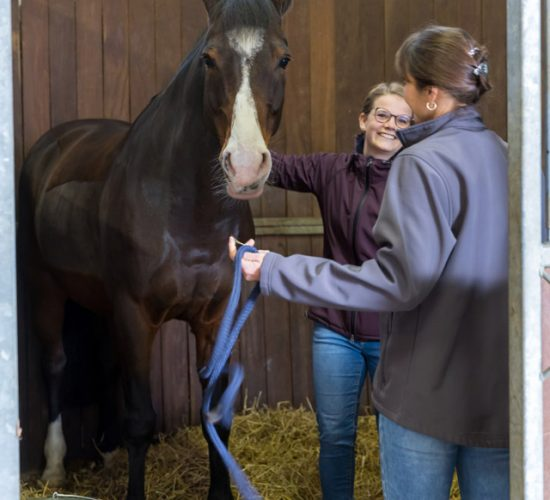 Ein Pferd in der Pferdebox - Tierarztpraxis Paeger