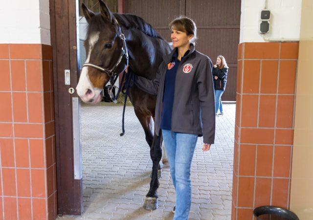 Ein Pferd wird zur Untersuchung geführt - Tierarztpraxis Paeger