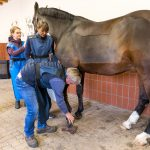 Vorbereitung zum Röntgen - Tierarztpraxis Paeger