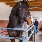 Ein Pferd wird untersucht - Tierarztpraxis Paeger