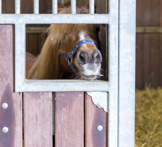 Ein Pony in der Pferdebox - Tierarztpraxis Paeger