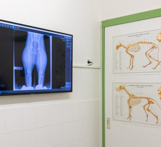 Das Röntgen von Kleintieren in der Tierarztpraxis Paeger