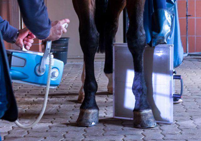 Eine Röntgenuntersuchung bei einem Pferd in der Tierarztpraxis Paeger
