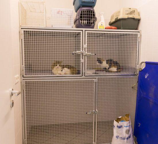 Kleintierboxen der Tierarztpraxis Paeger