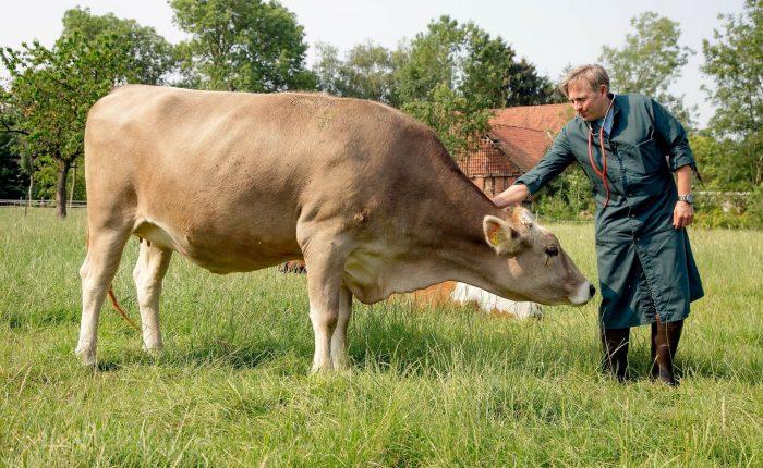Jörn Paeger mit Kuh auf der Weide