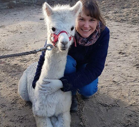Tierärztin mit weißem Alpaka auf dem Sandplatz