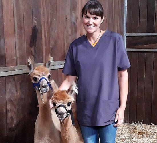Tierärztin mit zwei braunen Alpakas in der Pferdebox